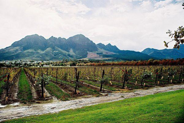 Cape Winelands 1